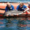 SOS Dolfijn op bezoek bij A Seal Stellendam