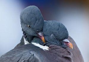 Wie liefde zaait