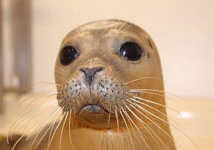 Zomerprogramma A Seal Stellendam
