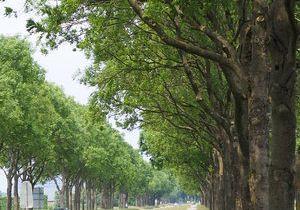 Diverse aanpassingen plan bomenkap N489