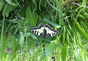 Dijken ook voor vlinders en bijen