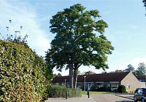 Help mee de Hoeksche Waardse Bomenlijst compleet te maken!